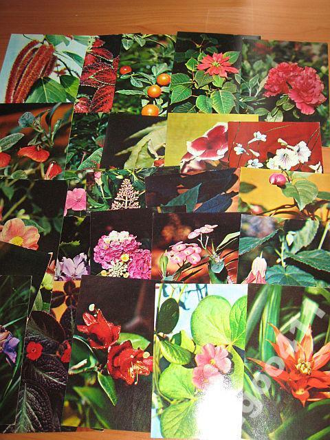 каждым набор открыток декоративные комнатные растения словами