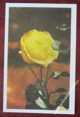 Открытка болгарские розы