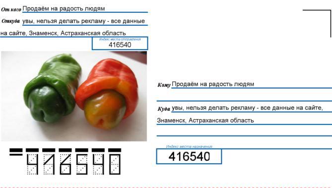Перец Чили Вилли Chilly-Willy 100шт бесплатная отправка из России, доставка 10-12 дней! Это реально!