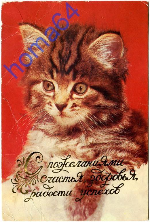 Поздравление с покупкой котенка 77