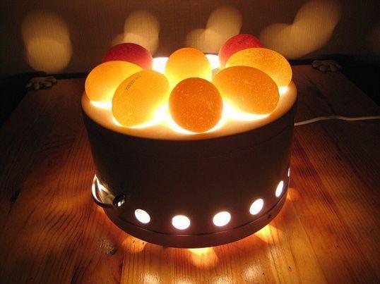 Овоскоп для перепелиных яиц