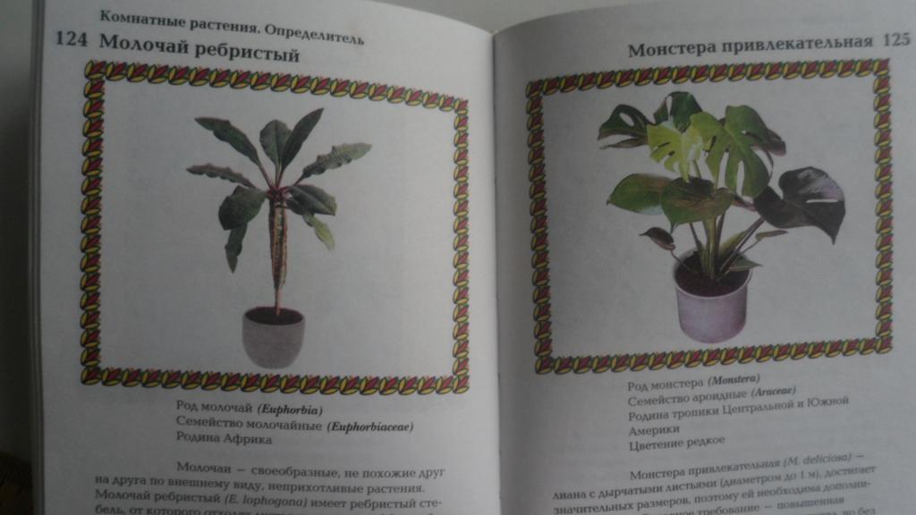 определитель комнатные цветы фото
