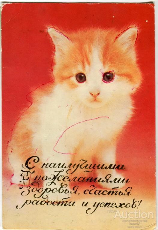 Поздравление с покупкой котенка 58