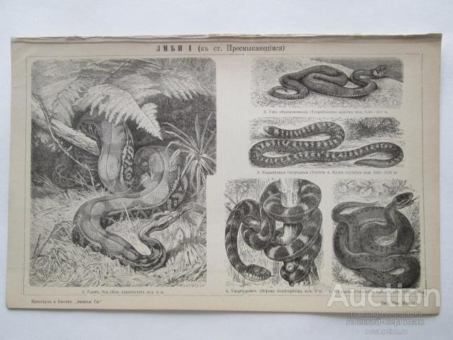 ЗМЕИ  I-II     литография  1898  года