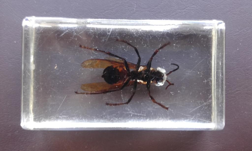муха в орг стекле