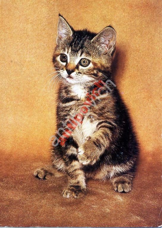 Картинки самолетов, открытки котята гдр