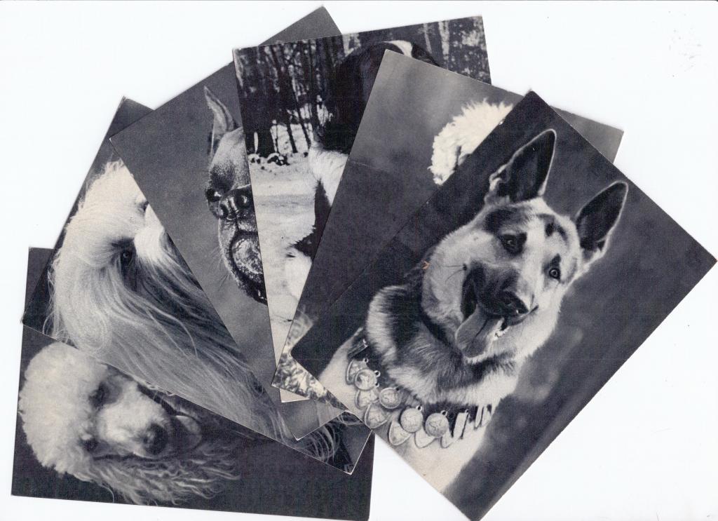 Набор открыток собаки