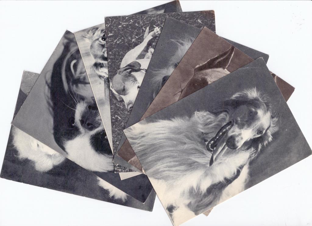 Набор открыток породы собак 160