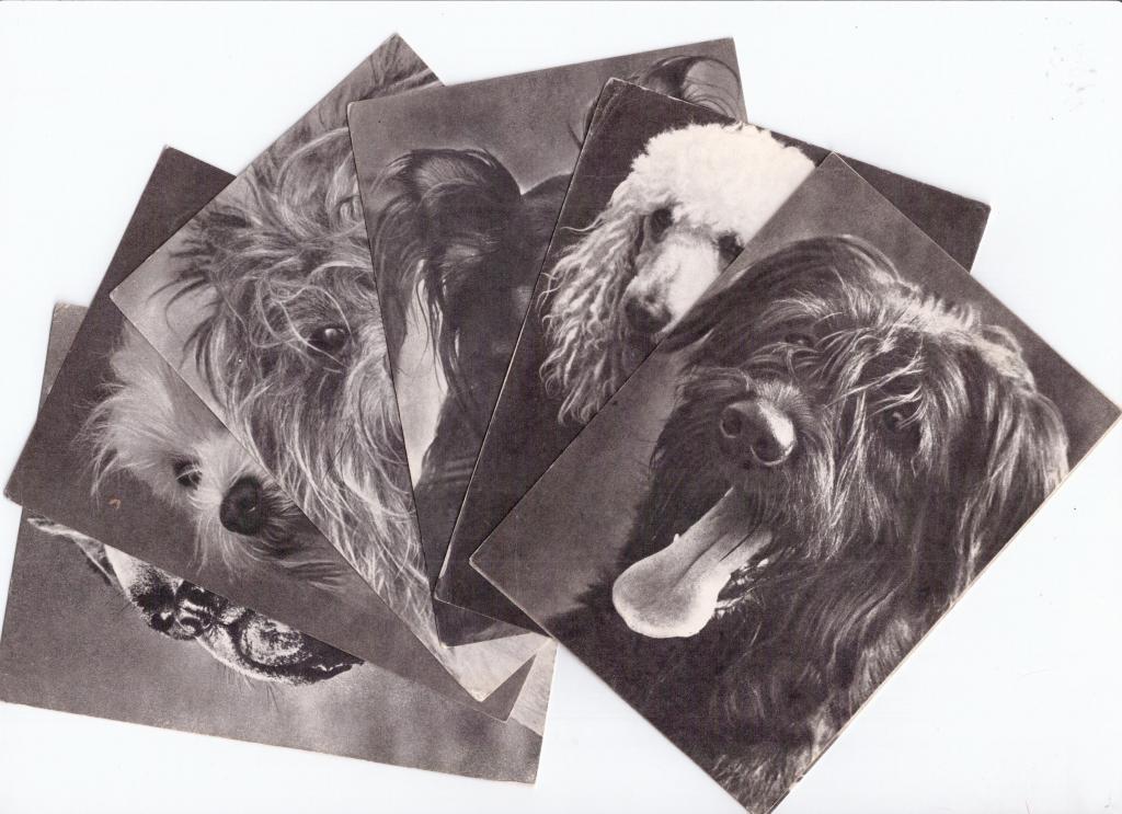 Набор открыток породы собак 181