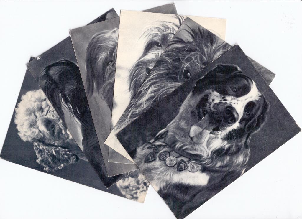 Набор открыток породы собак 174