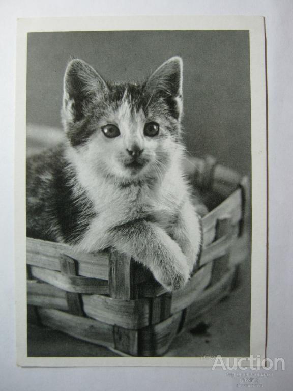 Открытки котята гдр