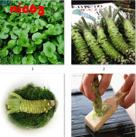 Семена Васаби Японский Хрен Wasabia japonica или Eutrema wasabi  100 штук