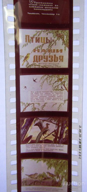 Диафильм Птицы наши друзья