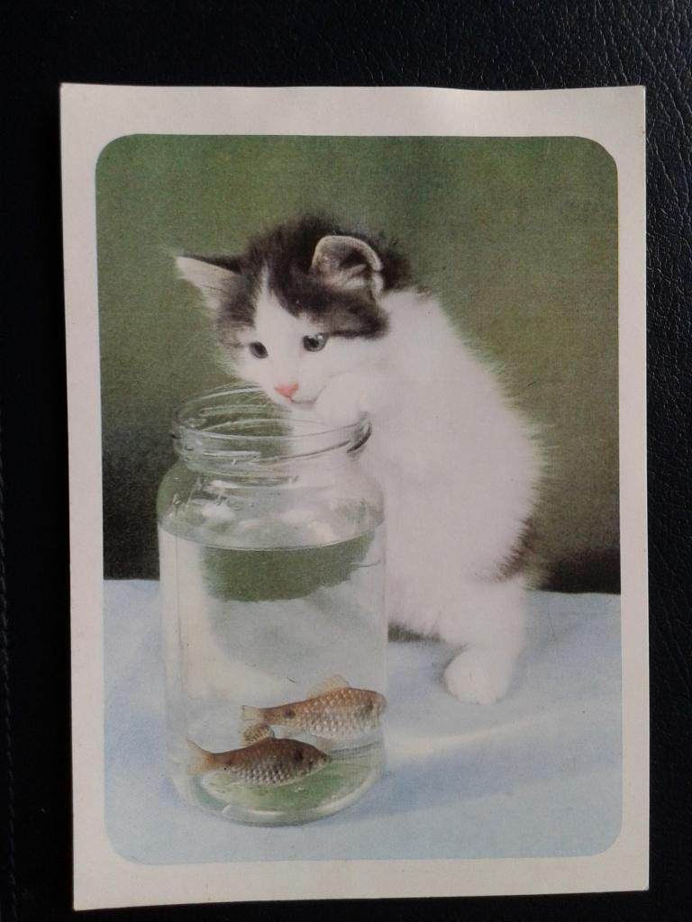 живая открытка кошка в банке
