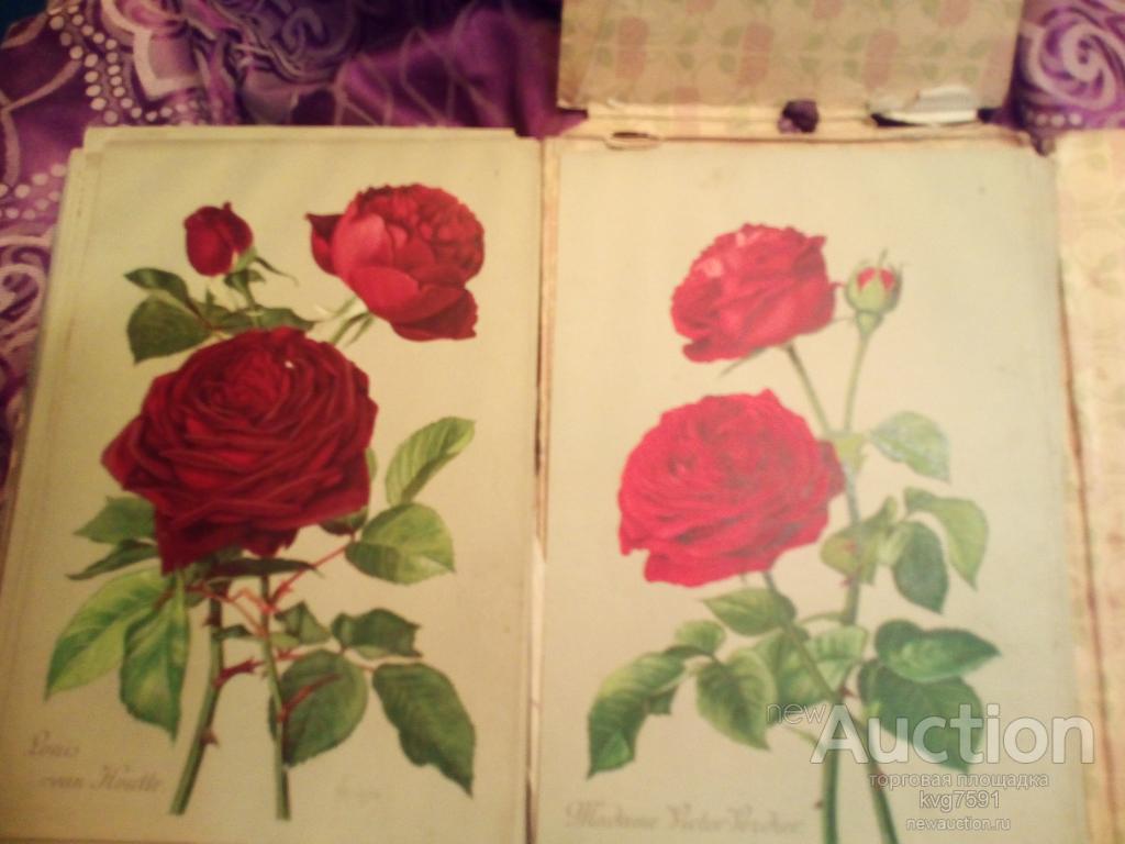 Альбом роз, Описание 300 лучших сортов роз. составил Кичунов.Издание второе дополненное. 1911г.