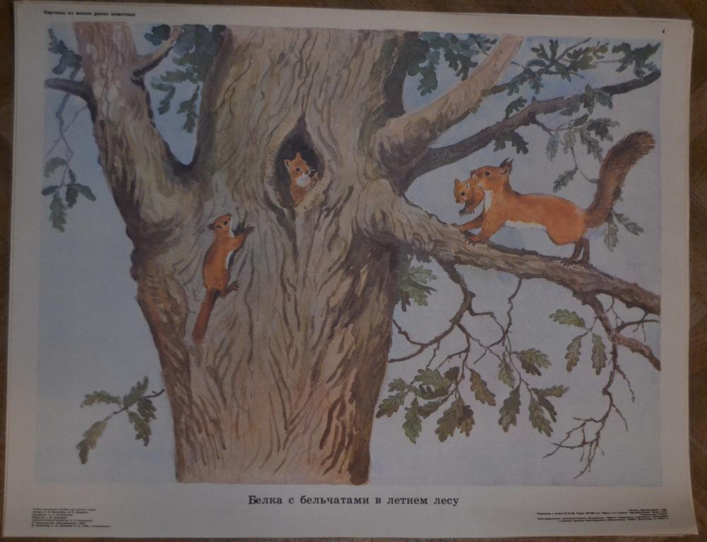 подбором картинки из жизни диких животных николаева мешкова огородникам