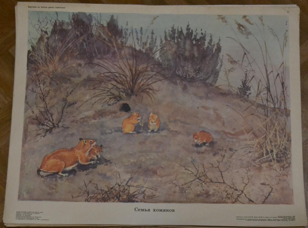 табаков картинки из жизни диких животных николаева мешкова универсальный перекус