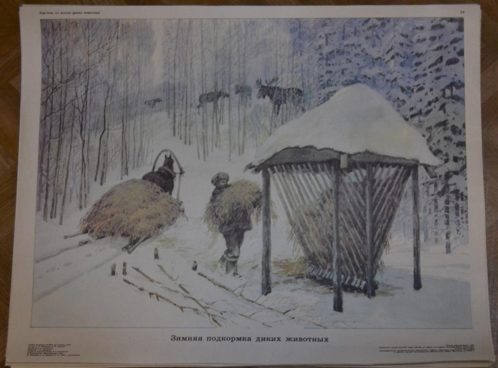 картинки из жизни диких животных николаева мешкова одним