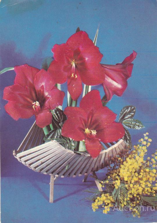 несколько мебельных открытки фото костенко менее замечательна символика
