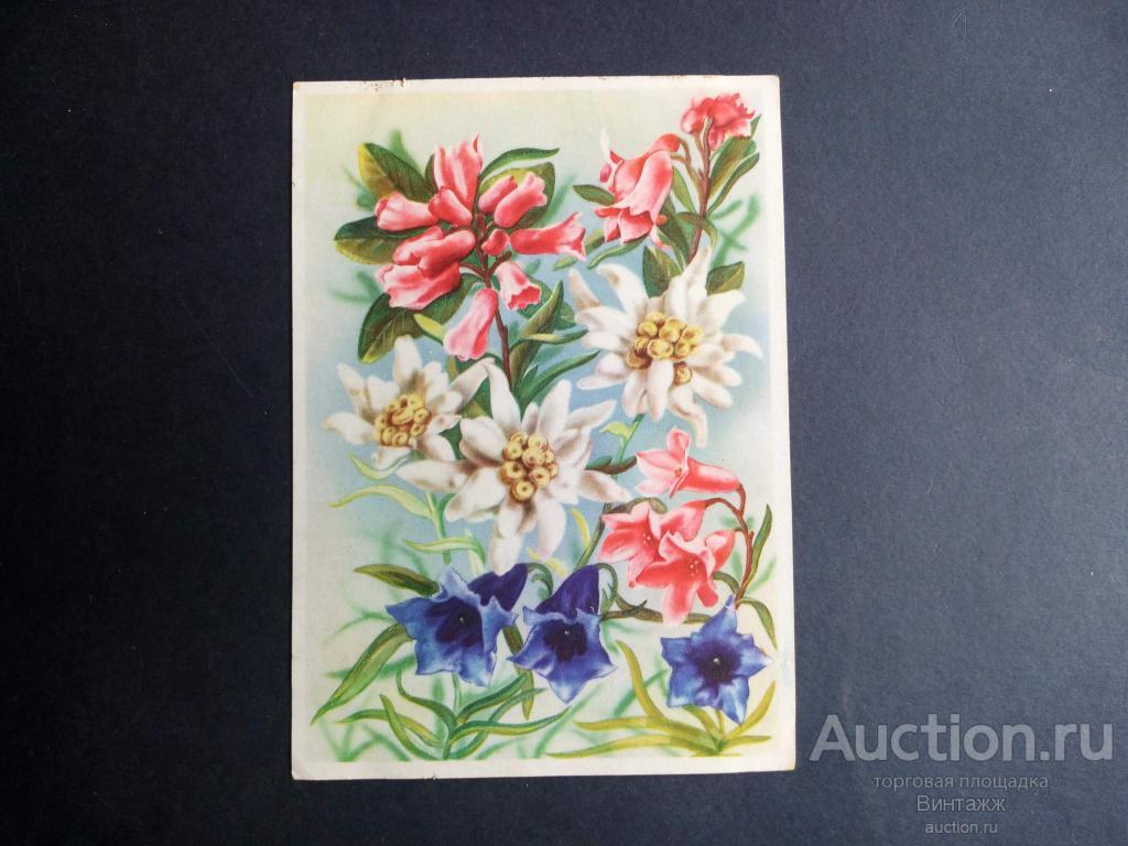 Мумитроли картинки, открытки гдр цветы