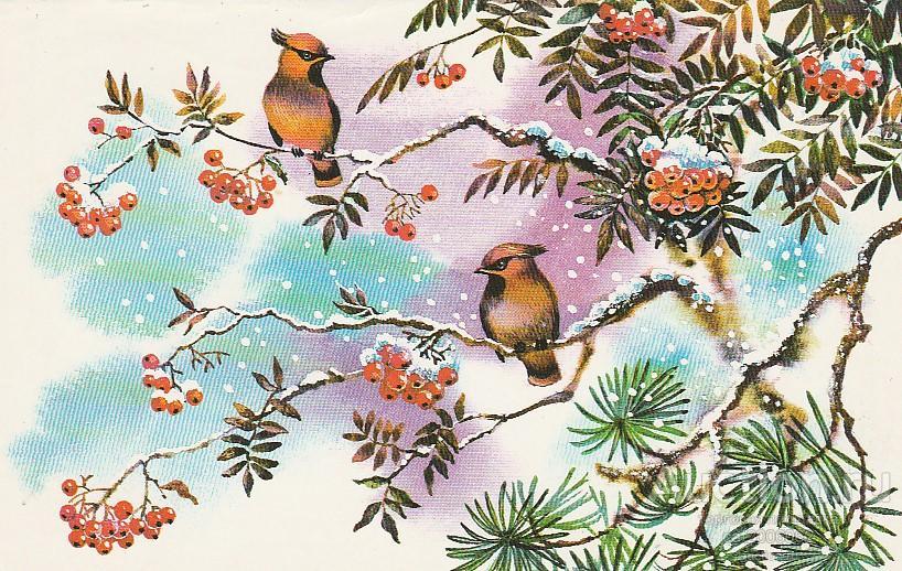 Новогодние открытки жебелев