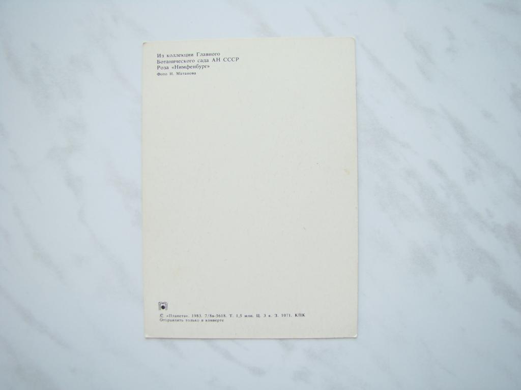 Открытка  ЦВЕТЫ. РОЗА. МАТАНОВ. 1983г. Чистая.   #ОТ1675