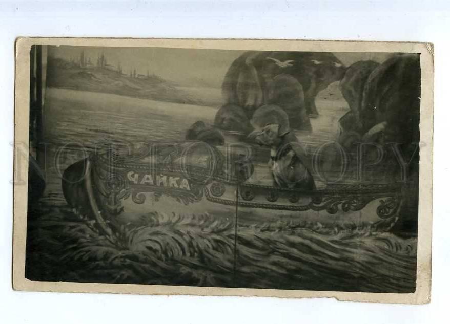 187535 СОБАКИ БОКСЕР собака лодка фотография коллаж Studio