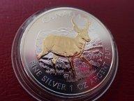 Канада 5 долларов 2013 год,  с позолотой.  Дост до 1,5 месяца ОРИГИНАЛ СЕРЕБРО/ L 144