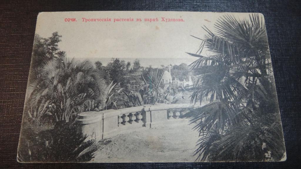 Сочи. Тропические растения в парке Худекова.