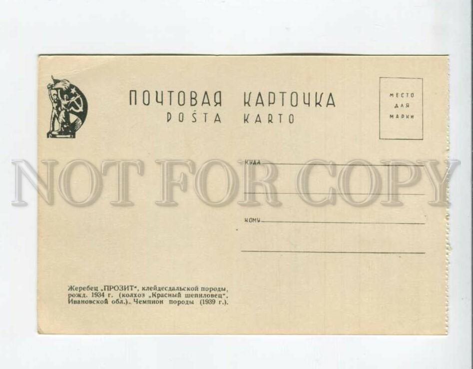 3162316 ВСХВ 1939 Жеребец чемпион ПРОЗИТ Иваново
