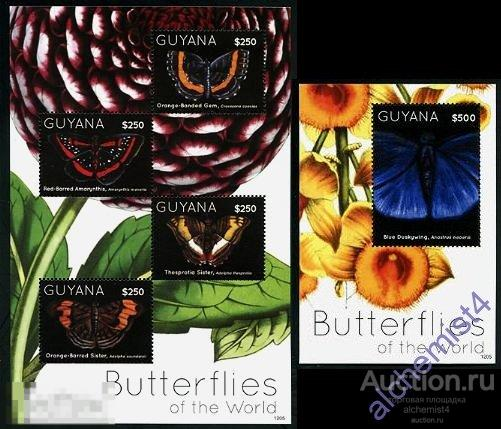 Гайана 2012 ** Насекомые: Бабочки